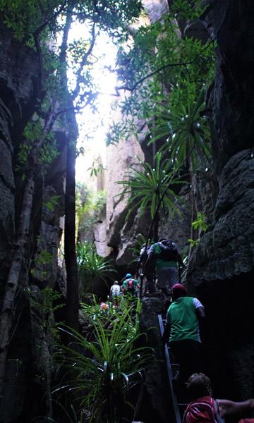 Flore des Tsingy de Bemaraha à Madagascar
