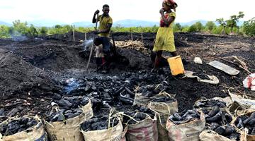 Les problèmes de la déforestaion à Madagascar avec la faburcation de charbon de bois