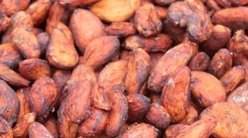 Fèces séchées de cacao de Madagascar
