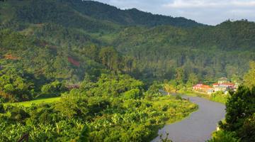 Les forêts tropicales primaires de Madagascar