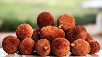 Découvrez les fruits des baobabs de Madagascar