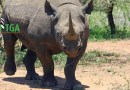 The Rhino in Crisis & The Misuse of Donor Money