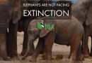 Elephants Are Not Facing Extinction