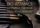 Do Animals Experience the same Pain as Humans?