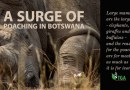 In progress: A Surge of Poaching in Botswana