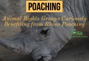 Poachers, Animal Rights Groups Curiously Benefiting from Rhino Poaching
