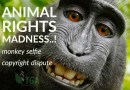 Animal Rights Sue for Copyright – Monkey Selfie