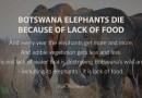 Botswana's Elephants Die Because of Lack of Food