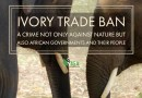Sad Day When Africa Celebrated Animal Rights Groups' Campaign Against Ivory Trade