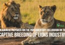 Searching for the  Truth… Captive Breeding of Lions Industry