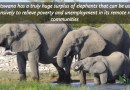 Elephants & Human Population Dynamics of Africa