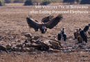 Evidence That Ivory Trade Ban Has Failed Africa: 500 vultures die in Botswana after eating poisoned elephants.