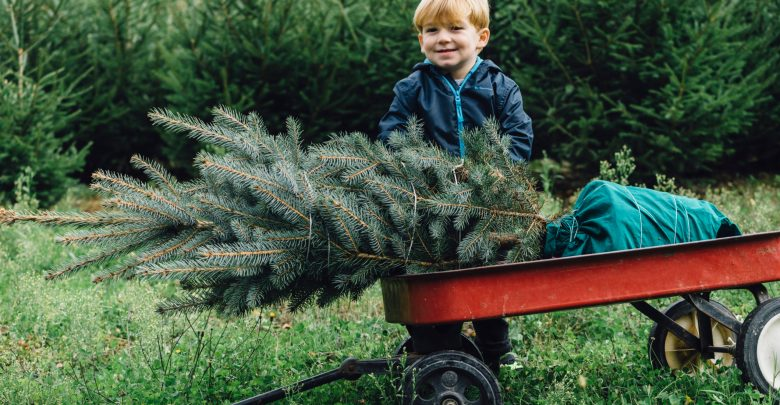 Christmas Tree Farms In Central Illinois