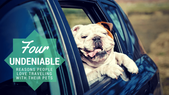 4 Reasons People Love To Travel With Pets  The Maids