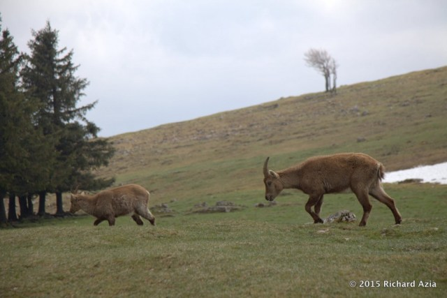 When I arrived they were standing by the grass and slowly made their way towards the cliff