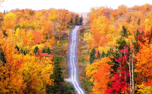 Mainefoliage Photo Gallery The Best Of The Years Past