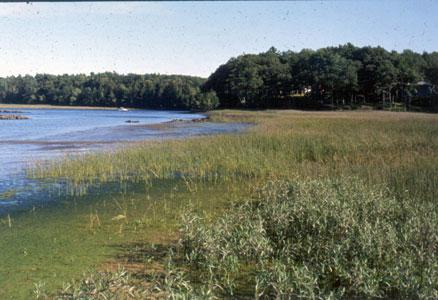 Maine Natural Areas Program Natural Community Fact Sheet