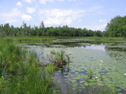 Wetlands, Maine Department of Environmental Protection