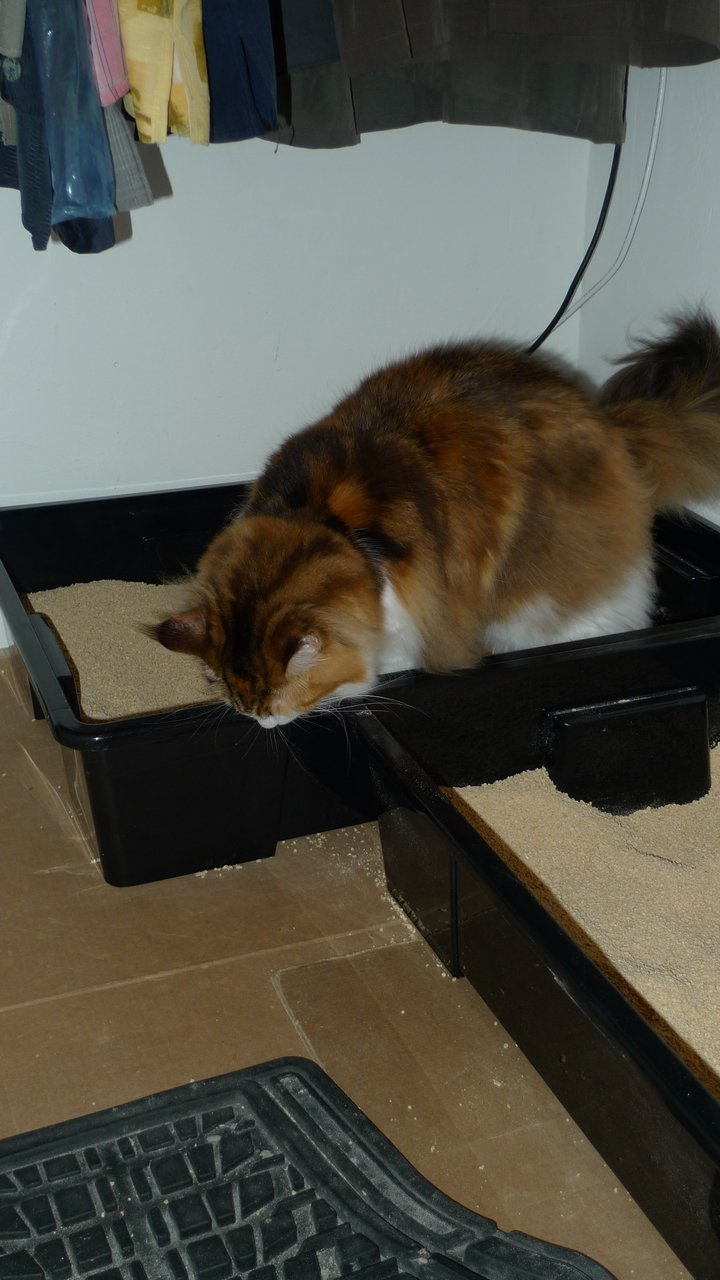 Litter boxes  Page 2  Maine Coon Product Reviews  Maine