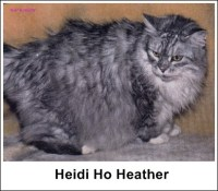 Heidi Ho Heather