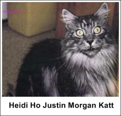 Heidi Ho Justin Morgan Katt