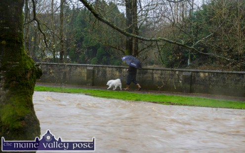 The dog has to be walked in any weather. Even beside the swollen River Maine today. ©Photograph: John Reidy