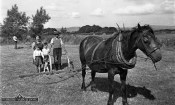 Mrs. Bridie Reidy with her sons, Danny and Jimmy and her brother Jamsie Geaney and neighbour, Johnny Reidy in the background in the same field at Knocknagore in the late 1940s. Photograph: Michael Reidy.