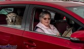 Lapping it up: Jennifer Brosnan from Abbeydorney brought her lucky 'Louis' to the Castleisland Drive-In-Bingo session on Sunday afternoon where players converged for the second Sunday this month. ©Photograph: John Reidy