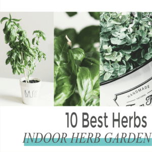 Easiest Herbs to Grow Indoors For Your Kitchen