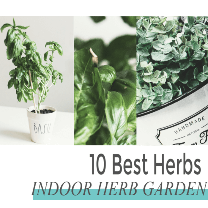 Easiest herbs to grow indoors for your kitchen mainly - Easiest herbs to grow indoors ...