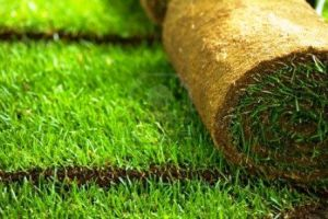 Sod Grass Rolls for North Dallas