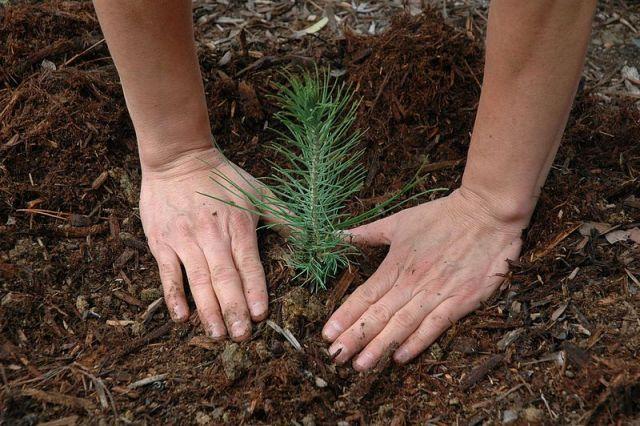 Tree Bush Planting Frisco TX