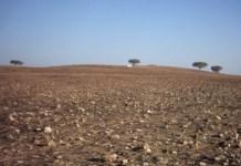 Resultado de imagem para Gestores discutem convívio com a seca no Ceará