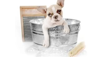 dog grooming redditch