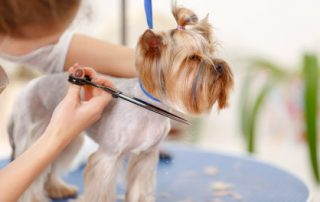 dog groomers redditch