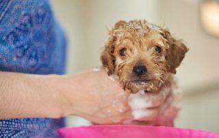 dog puppy grooming