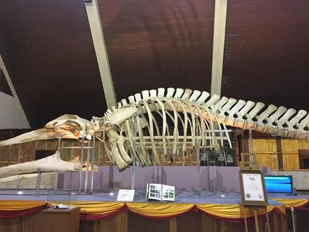 Muzium Negeri Sabah