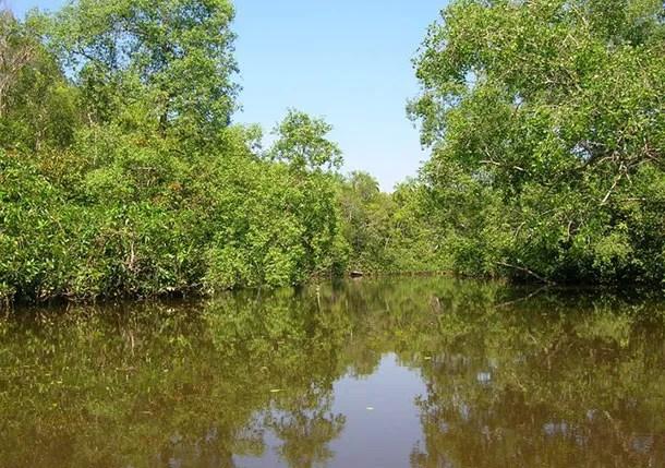 Sungai Yak Yah Cherating
