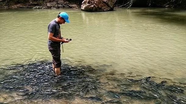 Sungai Moroli Ikan Tagal