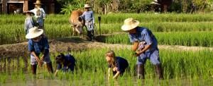 Southeast Asia: new steps in establishing the base