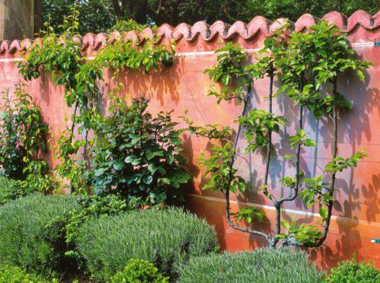comment habiller le mur de son jardin