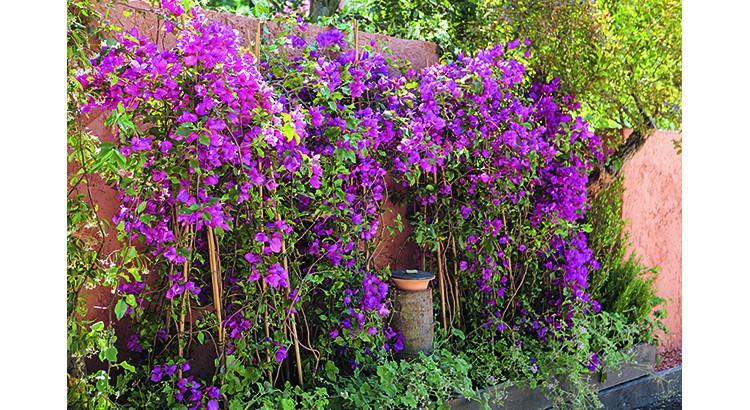 plantes grimpantes deco mur maison