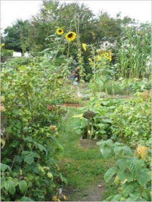 Jardin potager 2010