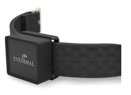 Le collier GPS pour suivre l'activité physique des chats et des chiens, Num'axes IOPP