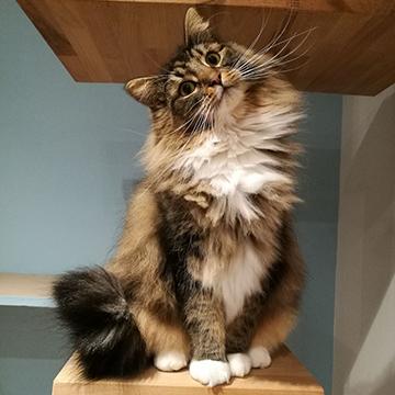 meet the cats maison