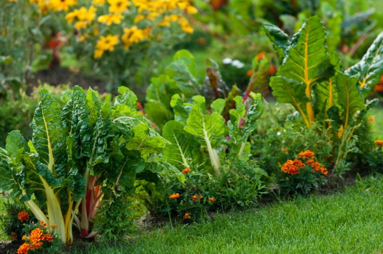 akodisinghe-jardiner-eco-responsable-maison-et-jardin