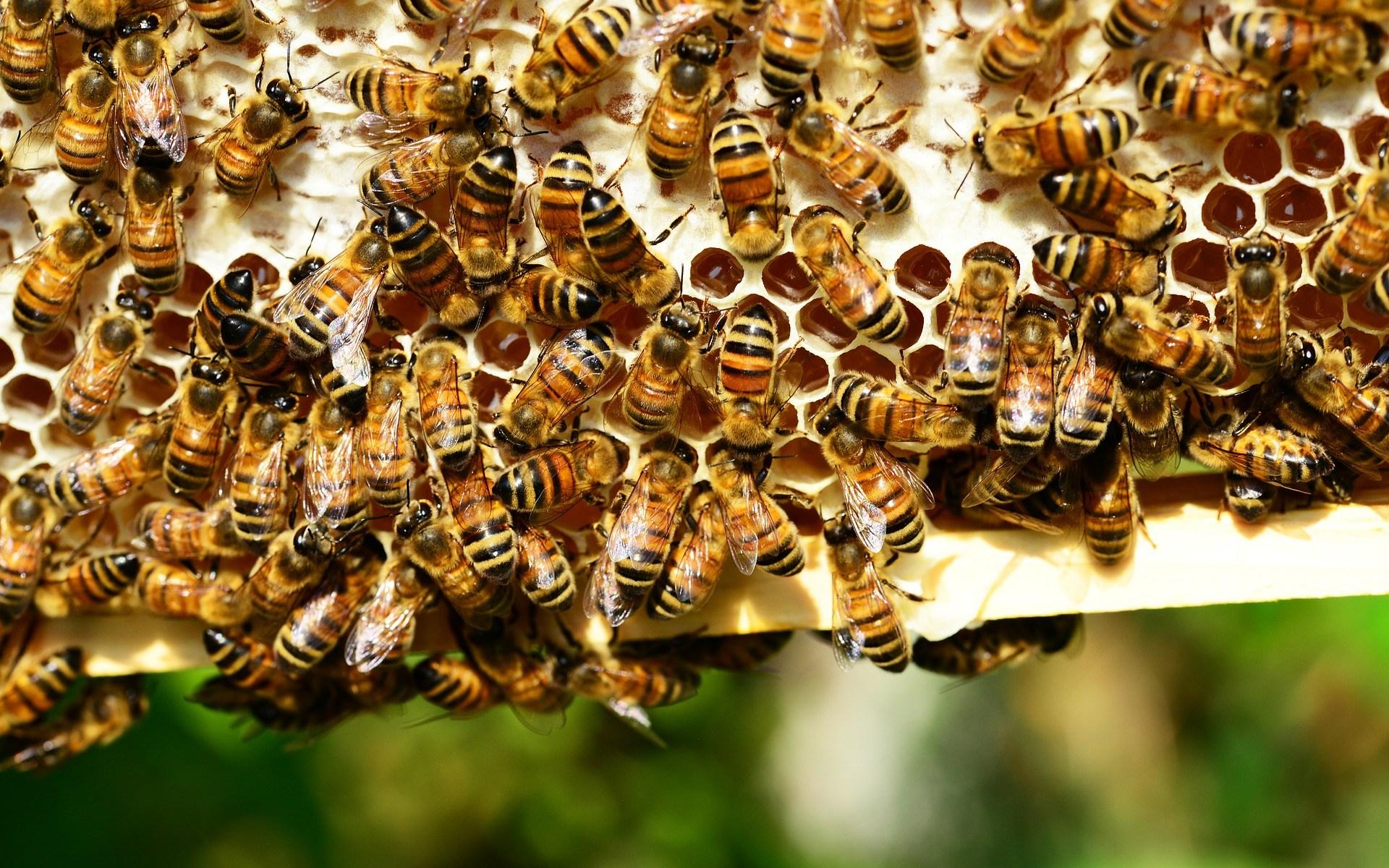 Cadre de ruche - miel et abeilles