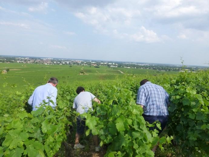 vineyard_visit