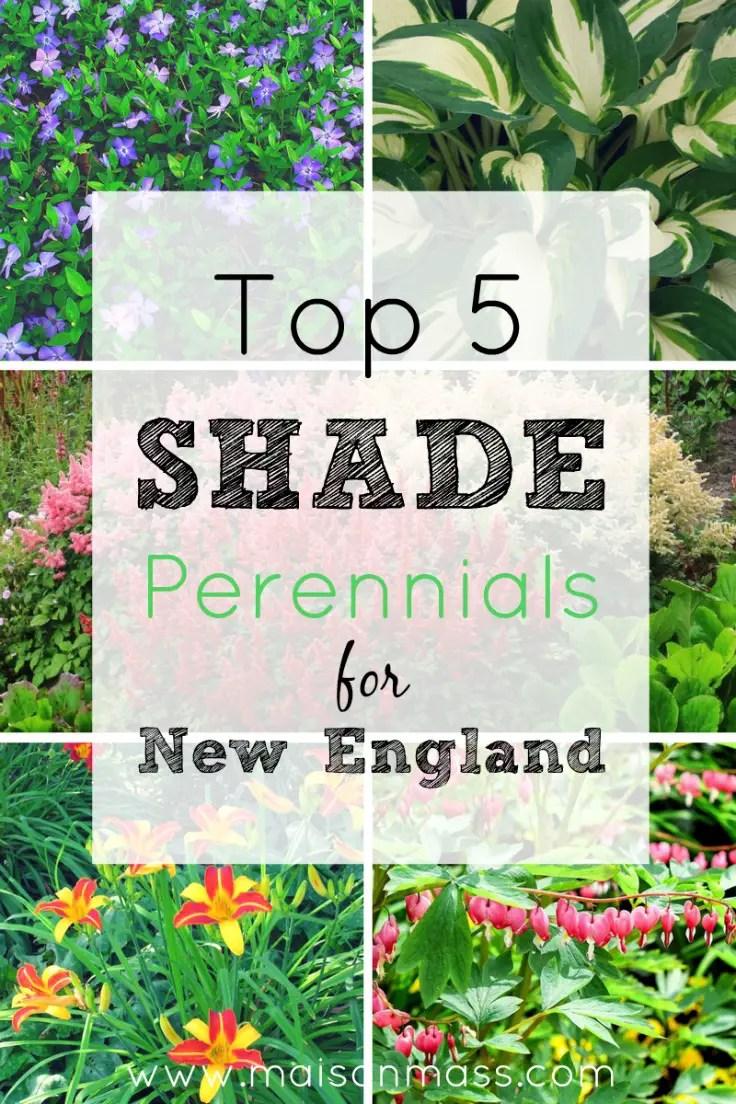 5 Shade Perennials For Your New England Garden