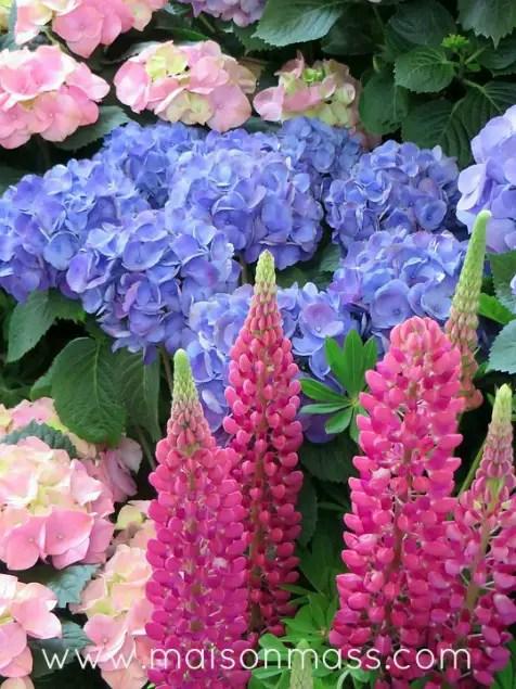 garden ready, big blooms